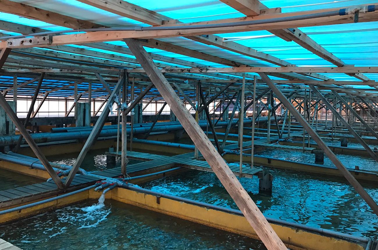 漁業を取り巻く環境の変化に対し、養殖という可能性でビジネスを切り拓く