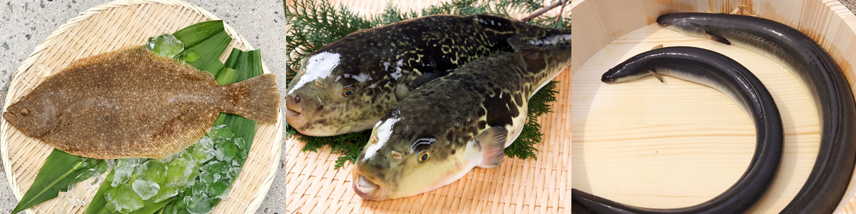 養殖魚種のご紹介